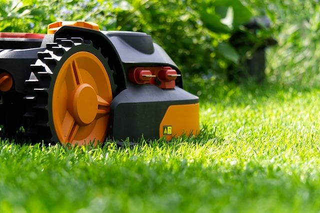 renowacja trawnika