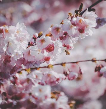 Czapki wiosenne damskie – przegląd propozycji wiosna/lato 2019