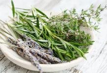 Terapie ziołowe