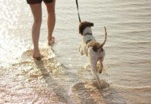 Zdrowe i mocne stawy u psa